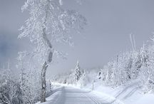 winter wonderland / by Sheila Eibes