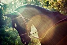 Equestrian / by Martha Weis
