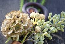Jamie <3 Sashia   / Wedding Floral Design / by Autumn Hartman