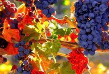 All things wine / by Pamela Longe Lambiase
