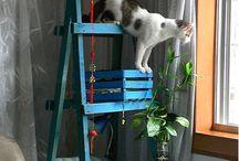 Here Kitty Kitty / by Liz Moe