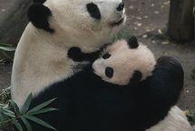Panda Love / by Moms Little