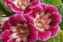 Flores / by Eliza Giubi
