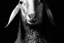 Animals / by Hank Gunawan