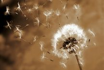 Flowers I Love! / by Julie Ann Castello