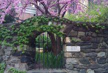 garden ideas / by Missy Bowen