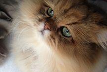 Cats on cats on cats! / by Jennifer Battles