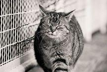 :3 Kitty Cat Cat  / by Panida Aomimp