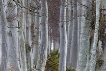 trees / by susan beatty