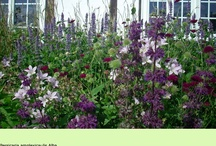 gardens & flowers / by Kay Gary