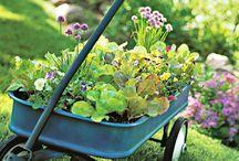 Gardening Ideas / by Elizabeth Stracener