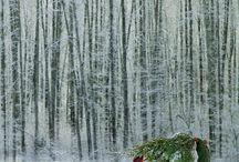Christmas / by Sandra Kipps