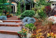 Curb Appeal / Front yards with no lawn, xeriscaping, southwestern gardening / by Cathy Mandel