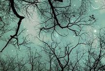 Sky / by Kate Bowman
