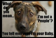 Funny dog caption quotes / by Brooke Toler Belote