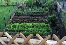 Veggie gardens / by Sharing Life's Abundance