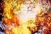 Halloween/Fall / by Traci Steinman