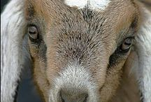 Animals & their stuff! / by Wendy Michaud Savary