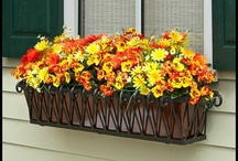 Window Boxes / by Brad Carlsbad