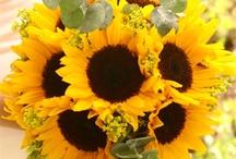 Sunflowers / by Ann Thompson