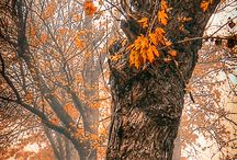 Autumn / by Lydia Olsthoorn