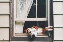 windows / by Paula Hasenack