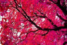 pretty  / by Melinda Griser