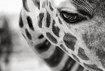 amazing animals / by Katie Forsbach