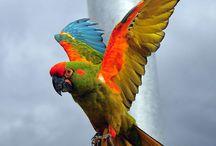Birds / by Connie Morgan