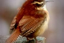 birds / by Barb ODonnell