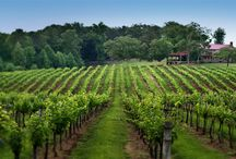 North Carolina Wine / As well as being the home of America's first grape, North Carolina is the only place in the world where every major type of grape is grown. There's nothing quite like tasting wine where it was made.  / by Visit North Carolina