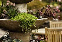 future garden / by Mallory Fryz