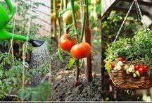 Gardening - Vegetables / by Laurel Johnson