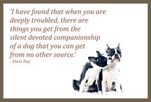 Happy Pet Thoughts / Pet quotes and sayings / by PetCraftStore.com