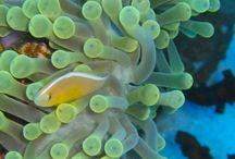 Sea Anemone / by Ellie Sabado
