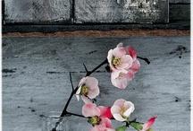 FLOWER loveliness . . / by Sue Pate