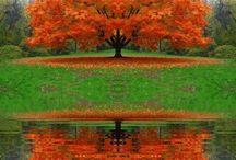 Autumn / by Gaylene Ort