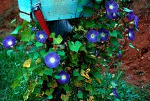 Flowers, Plants and the Outdoors / Flowers, plants and the outdoors / by Spirit Child Hippie Witch
