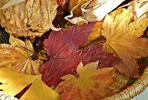 fall / by Kathy Haverkamp