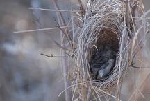 bird nests / by Deanna Haupers