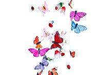 butterflies / by Kimmy Kat
