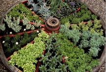 Garden / by Regina Garry Smith
