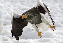 Birds of a Feather / by Vesta Glenn