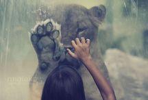 Magic / by Lindsay Walton