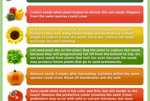 Seed Saving / by Coloma Public Library