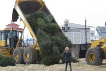 Christmas Trees / Photos, facts and more on Christmas Trees / by The Davey Tree Expert Company