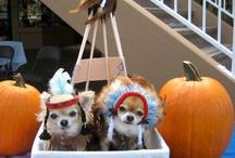 Dog Halloween Contest / by Michelle Duckworth
