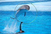 DOLPHINS / by Julie Allred