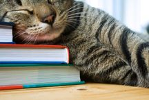 Book-Loving Animals / books + animals = joy | Livermore Public Library / by Livermore Public Library - #LivLibrary
