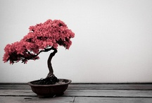 Bonsai / by AlienMax